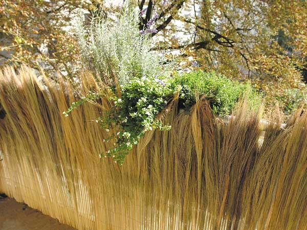 Farnmatten Natürlicher Sichtschutz Aus Farnhalmen Für Garten